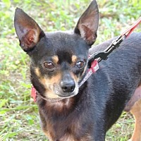 Adopt A Pet :: CHICO - Andover, CT