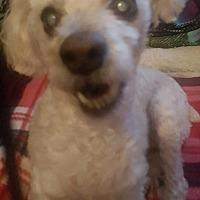 Adopt A Pet :: Ethel - Riverside, CA