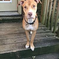 Adopt A Pet :: Sweet Pea - Sunbury, OH