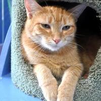 Adopt A Pet :: Willma - Northbrook, IL