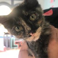 Adopt A Pet :: FLOPPY - Houston, TX
