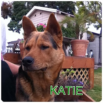 German Shepherd Dog Mix Dog for adoption in El Segundo, California - Katie