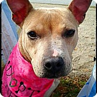 Adopt A Pet :: Aaliyah - Charlotte, NC
