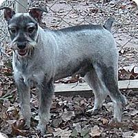 Adopt A Pet :: Eli - Crystal River, FL