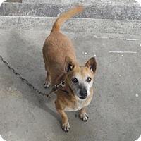 Adopt A Pet :: Sally - Albany, NY