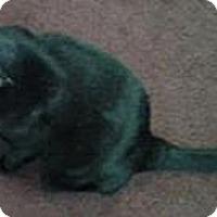 Adopt A Pet :: Buddy - Laguna Woods, CA