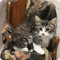 Adopt A Pet :: Wellesley - Sacramento, CA