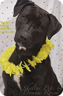 Labrador Retriever Mix Dog for adoption in Newnan City, Georgia - Sparky