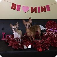 Adopt A Pet :: Paris & London - Davie, FL