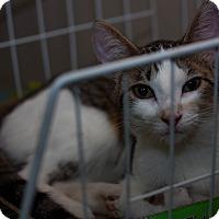 Adopt A Pet :: Thumbelina - Walla Walla, WA