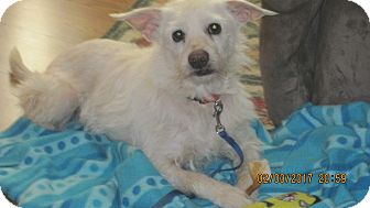 Terrier (Unknown Type, Small) Mix Dog for adoption in Greensboro, Maryland - Joseph