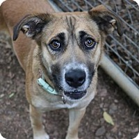 Adopt A Pet :: Dottie - Mocksville, NC