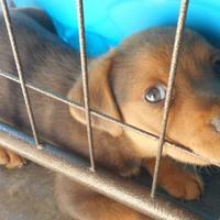 Adopt A Pet :: Tweety - Opelousas, LA