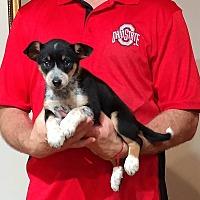 Adopt A Pet :: Piper - South Euclid, OH