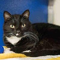 Adopt A Pet :: ALICE - Norfolk, VA