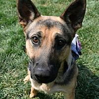 Adopt A Pet :: Ellie - Dublin, CA
