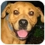Photo 1 - Labrador Retriever/Retriever (Unknown Type) Mix Dog for adoption in Rockville, Maryland - Audrey