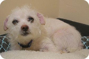 Terrier (Unknown Type, Small) Mix Dog for adoption in Virginia Beach, Virginia - Tiny