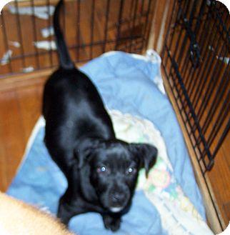 Labrador Retriever Mix Puppy for adoption in Greensboro, Georgia - Ebony
