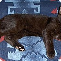 Adopt A Pet :: Cory - Richmond, VA