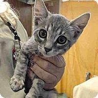 Adopt A Pet :: Bailey - Escondido, CA