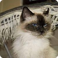 Adopt A Pet :: Stephanie - New Port Richey, FL