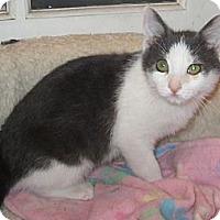 Adopt A Pet :: Marbles - Lafayette, CA