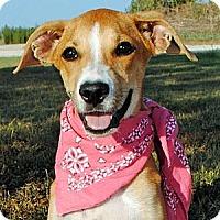 Adopt A Pet :: Sonya - Gonzales, TX