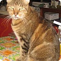 Adopt A Pet :: Dusky - Dallas, TX