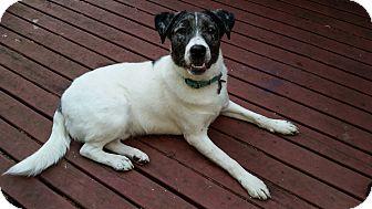 Border Collie Mix Dog for adoption in Silverdale, Washington - Bruiser