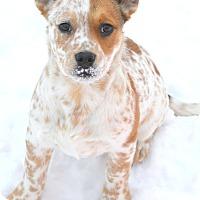 Adopt A Pet :: adoption pending Clara - Delano, MN