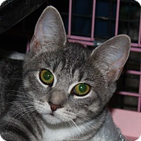 Adopt A Pet :: Willow - North Branford, CT