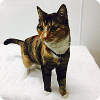 Adopt A Pet :: Marci - Mission Viejo, CA