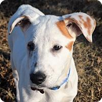 Adopt A Pet :: *Popeye - PENDING - Westport, CT