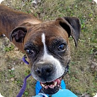Adopt A Pet :: Honey Bee - Wethersfield, CT