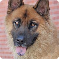 Adopt A Pet :: Brody von Brilon - Los Angeles, CA