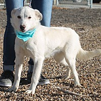 Adopt A Pet :: Bowie - Hereford, TX