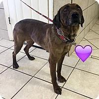 Adopt A Pet :: Ali - Cumming, GA