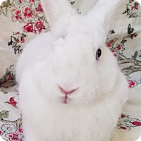 Adopt A Pet :: Glenna - Los Angeles, CA