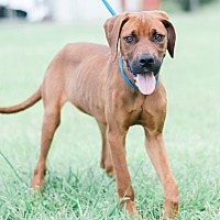 Adopt A Pet :: Penelope $125 - Seneca, SC