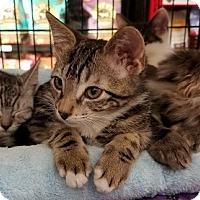 Adopt A Pet :: Henry - San Jose, CA