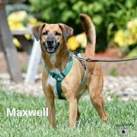 Adopt A Pet :: Maxwell - Ottumwa, IA