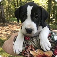 Adopt A Pet :: Mary Ann - Glastonbury, CT