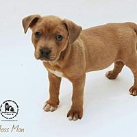 Adopt A Pet :: Moss Man - Kenner, LA