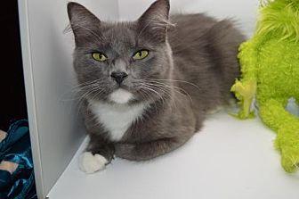Domestic Longhair Cat for adoption in Alpharetta, Georgia - Khaleesi