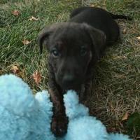 Adopt A Pet :: RIVER - Spruce Grove, AB