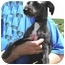 Photo 1 - Poodle (Miniature)/Terrier (Unknown Type, Small) Mix Dog for adoption in Cincinnati, Ohio - Travis