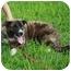 Photo 3 - Great Pyrenees Mix Puppy for adoption in Largo, Florida - Jasmine
