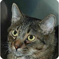 Adopt A Pet :: Nick - Warminster, PA