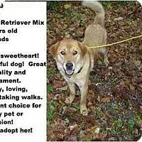 Adopt A Pet :: # 733-09 @ Animal Shelter - Zanesville, OH